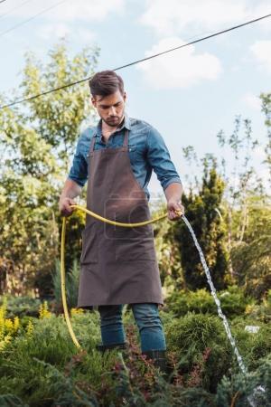 Gardener in apron watering plants