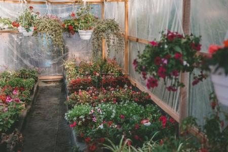 Various flowers in greenhouse