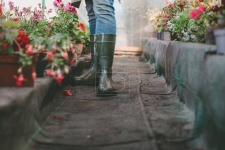 gardener standing in greenhouse