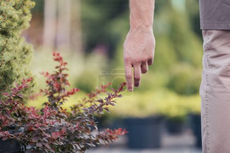 man touching plant in garden