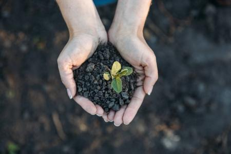 Photo for Cropped shot of human hands holding young green plant in soil - Royalty Free Image