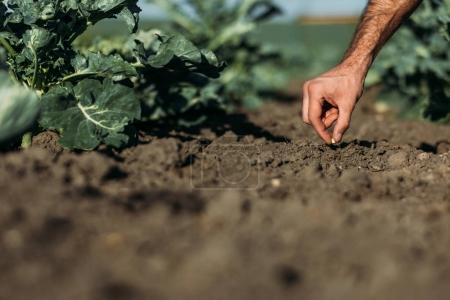 Photo for Cropped shot of farmer sowing one seed in soil - Royalty Free Image