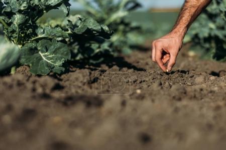 Photo pour Recadrée tir du fermier semer une graine dans le sol - image libre de droit