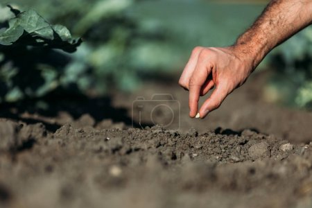 Farmer sowing seed