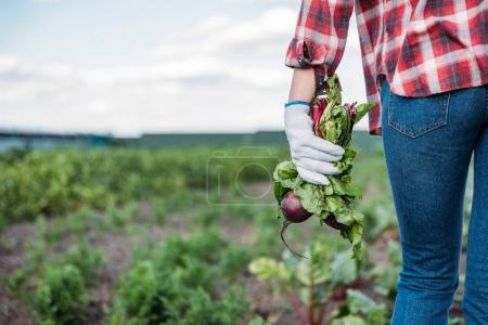 farmer holding beets in field