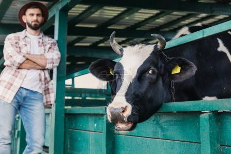 farmer looking at cow in stall