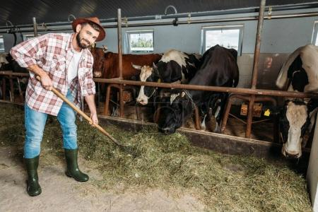 man with pitchfork feeding cows