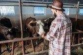 """Постер, картина, фотообои """"фермера кормления коров"""""""