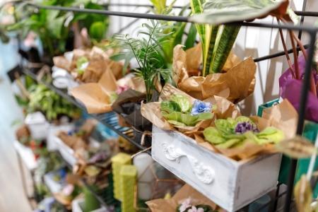 Fresh plants in flower shop