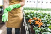 Gardener wearing protective gloves by blooming flowers in glasshouse