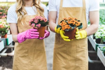 Couple of gardeners in gloves holding pots with flowers