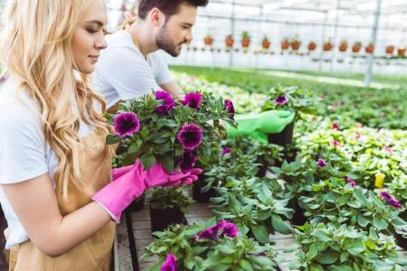 Male and female gardeners working in greenhouse
