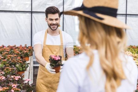 Male gardener presenting flowers in pot to his female colleague