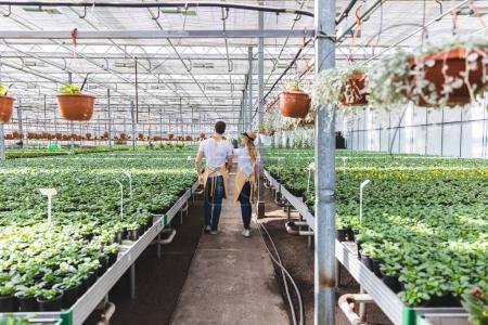 Couple of gardeners walking among plants in glasshouse