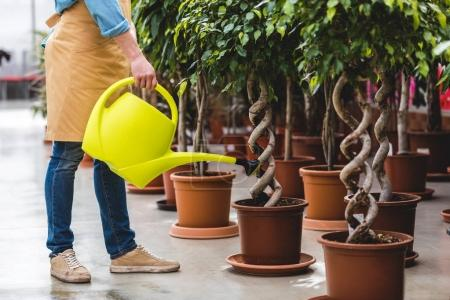 Close-up view of gardener with watering can taking care of plants in greenhouse