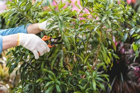 Close-up view of gardener cutting plants with pruner