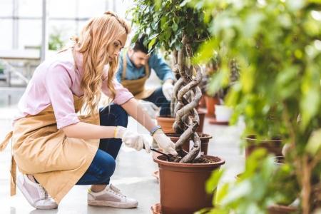 Photo pour Femme souriante avec pelle plantation ficus par jardinier mâle à effet de serre - image libre de droit
