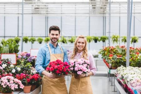 Young male and female gardeners holding pots with azalea flowers