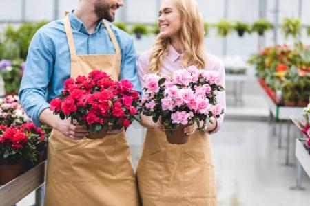 Couple of owners of greenhouse holding pots with azalea flowers