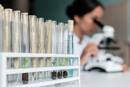 Photo for Close-up view of test tubes with wheat ears and green plants in soil on table in lab - Royalty Free Image