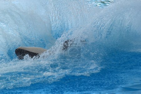 Big killer whale  on water