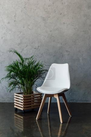 Photo for Green houseplant in pot and empty white chair indoors - Royalty Free Image
