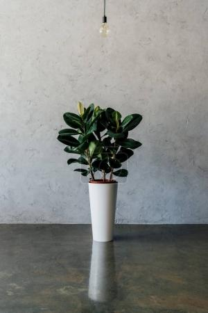 Potted plant at empty room