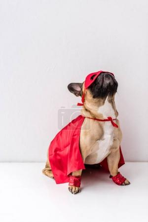 dog in superhero costume