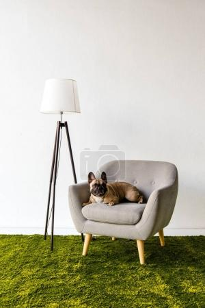 Dog lying on armchair in room