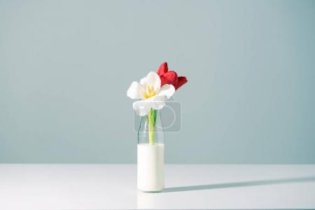 beautiful red and white flowers in bottle with milk on grey