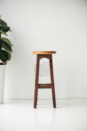 Photo pour Chaise et plante en bois avec des feuilles vertes sur blanc - image libre de droit