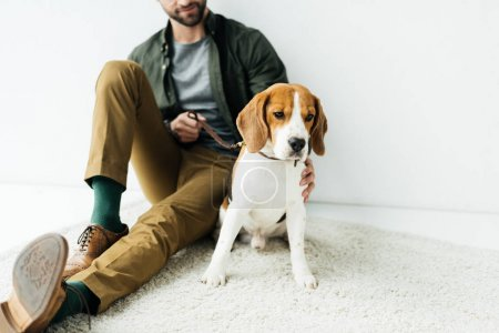 cropped image of man sitting with cute beagle on carpet on floor
