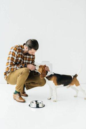man feeding cute beagle on white