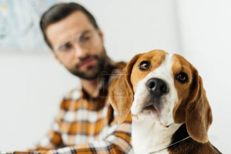 handsome businessman looking at cute beagle