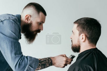 barber trimming customer beard at barbershop isolated on white