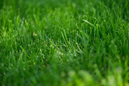full frame of empty green grass background