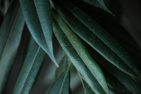 Photo for Close up view of plant with long green leaves backdrop - Royalty Free Image
