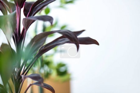 Photo for Close up view of houseplant with long leaves and blurred background - Royalty Free Image