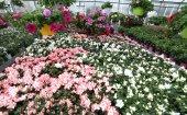 """Постер, картина, фотообои """"большие парниковых с красивыми цветами и растениями для продажи в t"""""""
