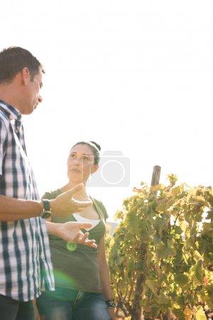 Photo pour Un jeune homme et une jeune femme bavardant dans les vignes portant des vêtements décontractés avec un ciel blanc en arrière-plan - image libre de droit