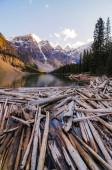 Landscape view of Moraine lake with dead trees in Canadian Rocky mountains
