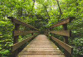 Wooden Bridge in Lush, Green Forest