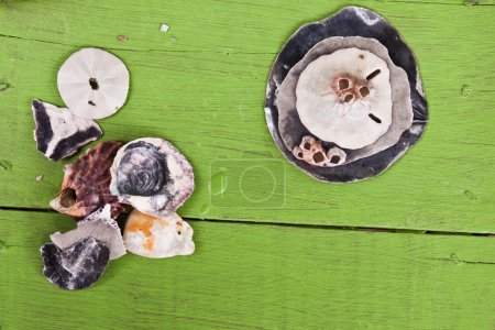 Seashells on green table