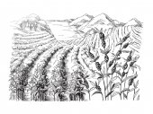 Coffee plantation landscape in graphic style hand-drawn vector illustration