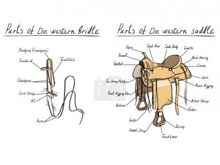 Parts of western saddle and bridle. Horse tack tool.