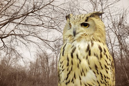 Western Siberian Eagle Owl against dry tree branches