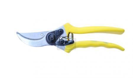 A Gardening scissor