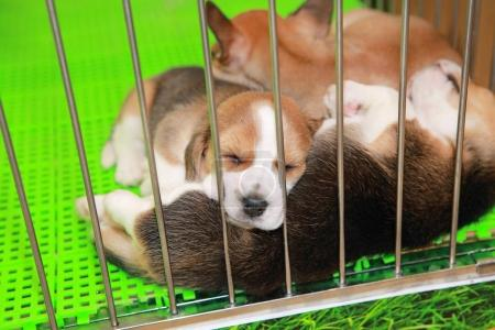 Puppies inside a cage on display for sale