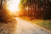 Sun shining over road, path, walkway through forest. Sunset Sunrise