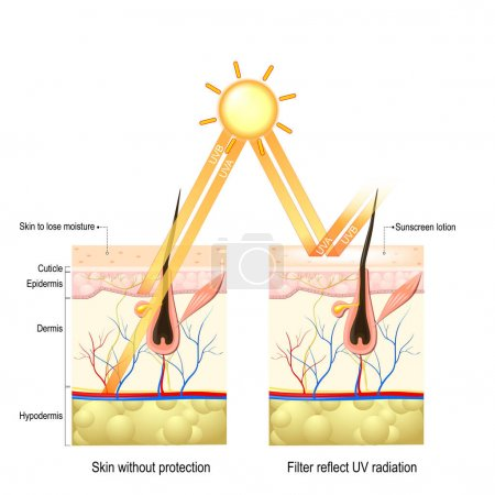 Protect human skin from UVA , UVB ray